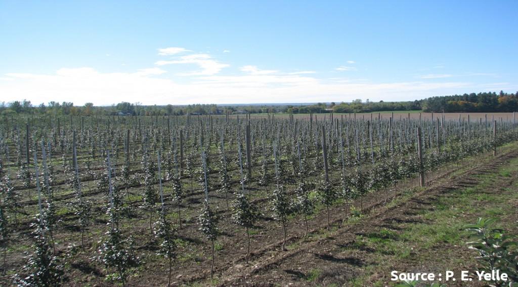 densité de plantation