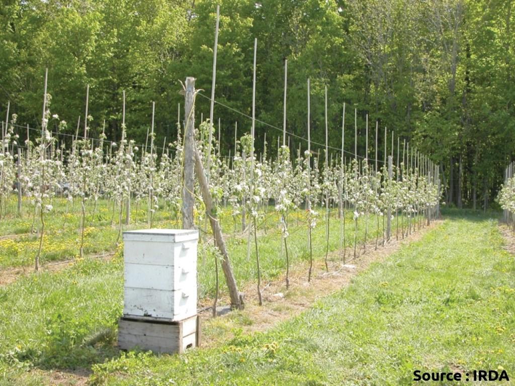 ruche dans un verger durant la floraison