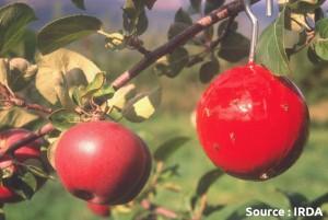 sphère rouge engluée (piège)