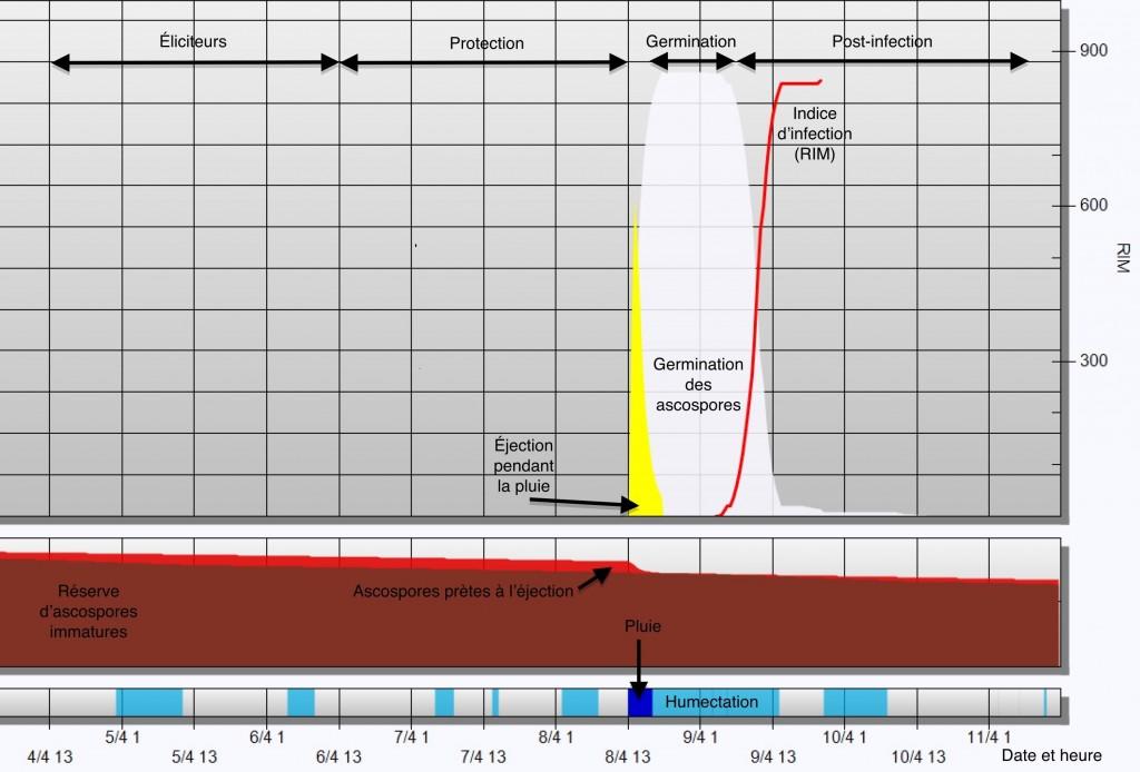 stratégies de traitement de la tavelure en lien avec une infection primaire simulée par RIMpro