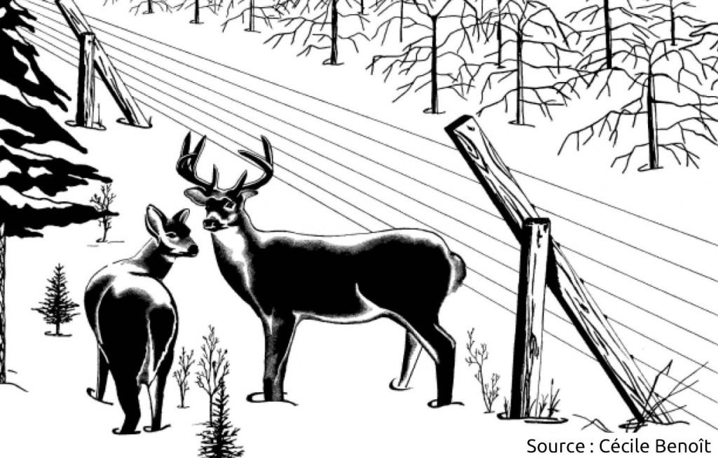 clôture contre le cerf de Virginie / chevreuil