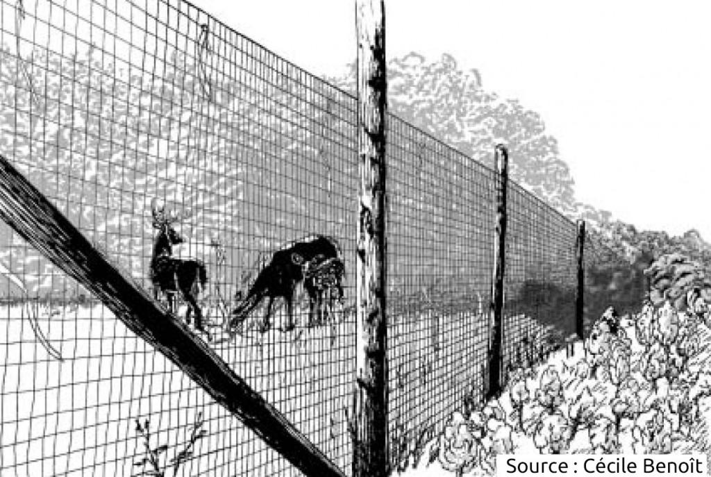 clôture en treillis contre le cerf de Virginie / chevreuil