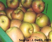 pommes Honeycrisp: patron de coloration b