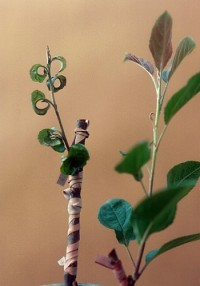 bois strié du pommier (feuilles)