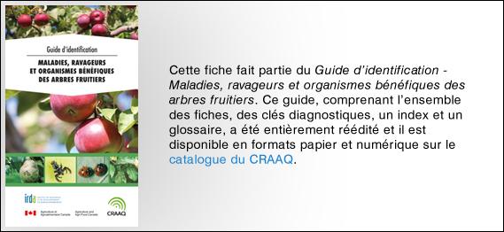 bannière du CRAAQ pour le Guide d'identification - maladies, ravageurs et organismes bénéfiques des arbres fruitiers